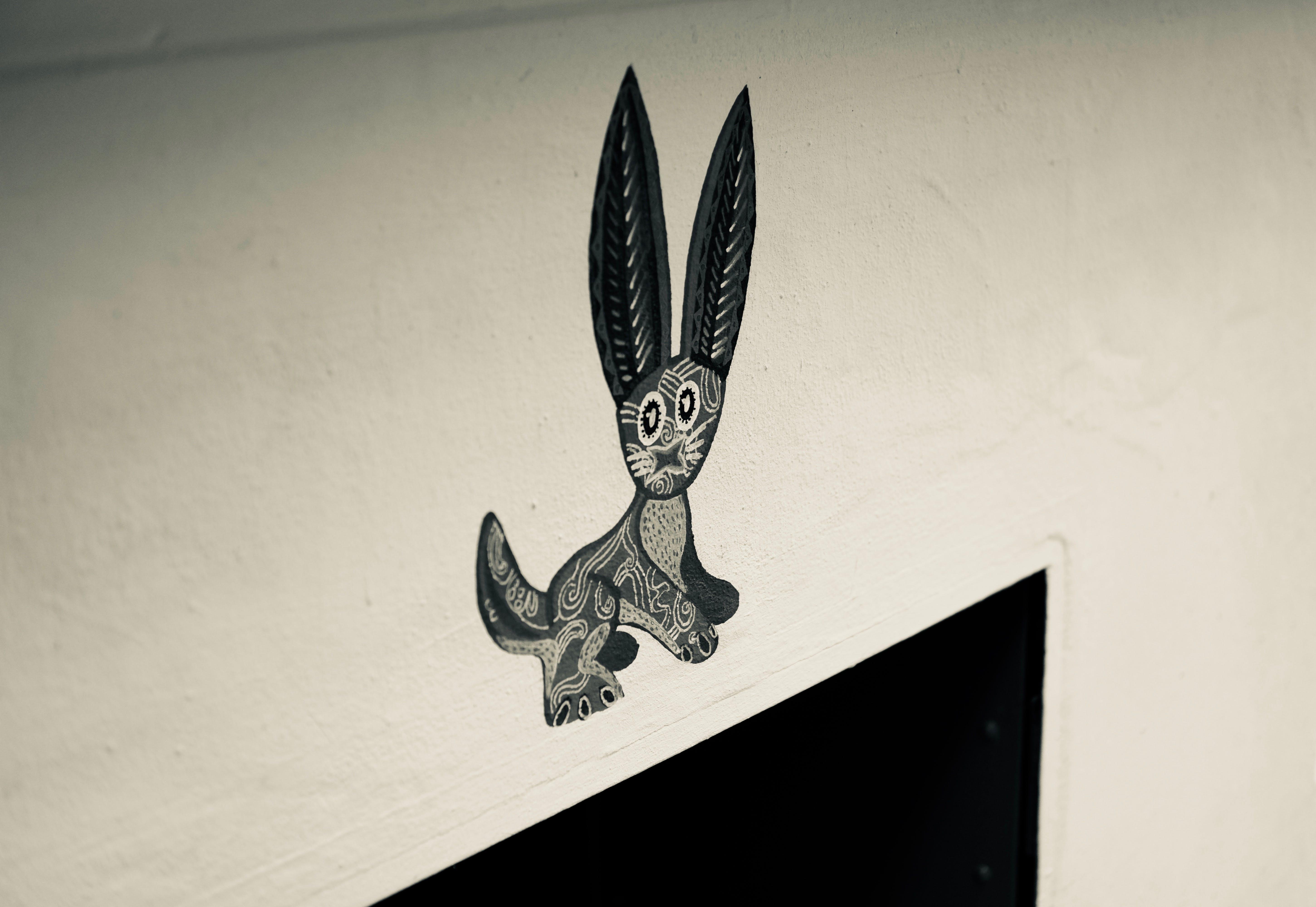 Základová fotografie zdarma na téma černobílá, králíček, králík, obrazy