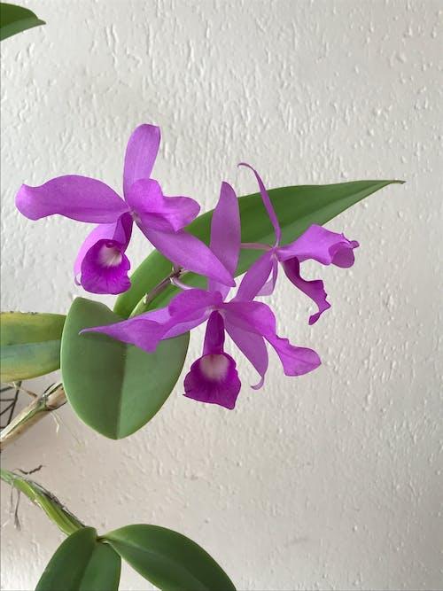 çiçek, çiçek açan, güzel çiçekler içeren Ücretsiz stok fotoğraf