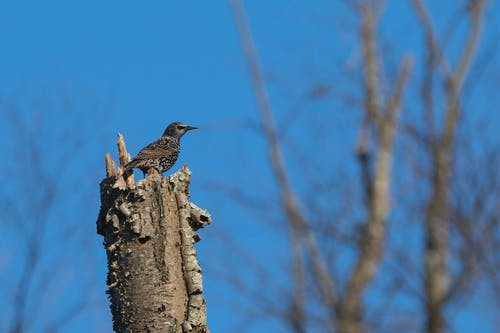 Brown Bird on Top of Brown Tree Trunk