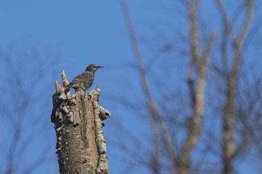 Brown Bird on Top of Brown Tree Trunk