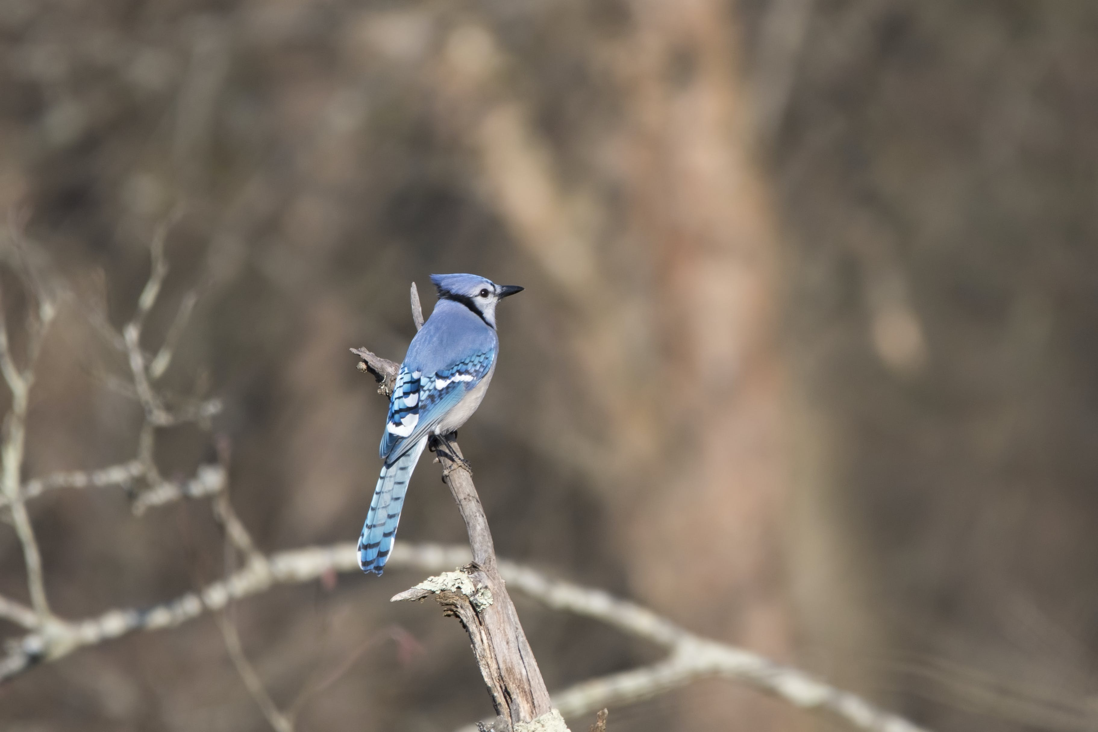 Tilt-shift Lens Photography of Blue Bird on Branch