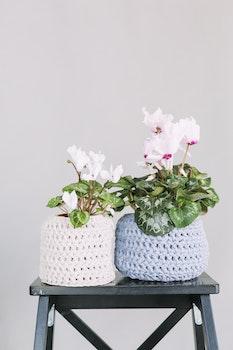 Two White and Blue Crochet Flower Pot