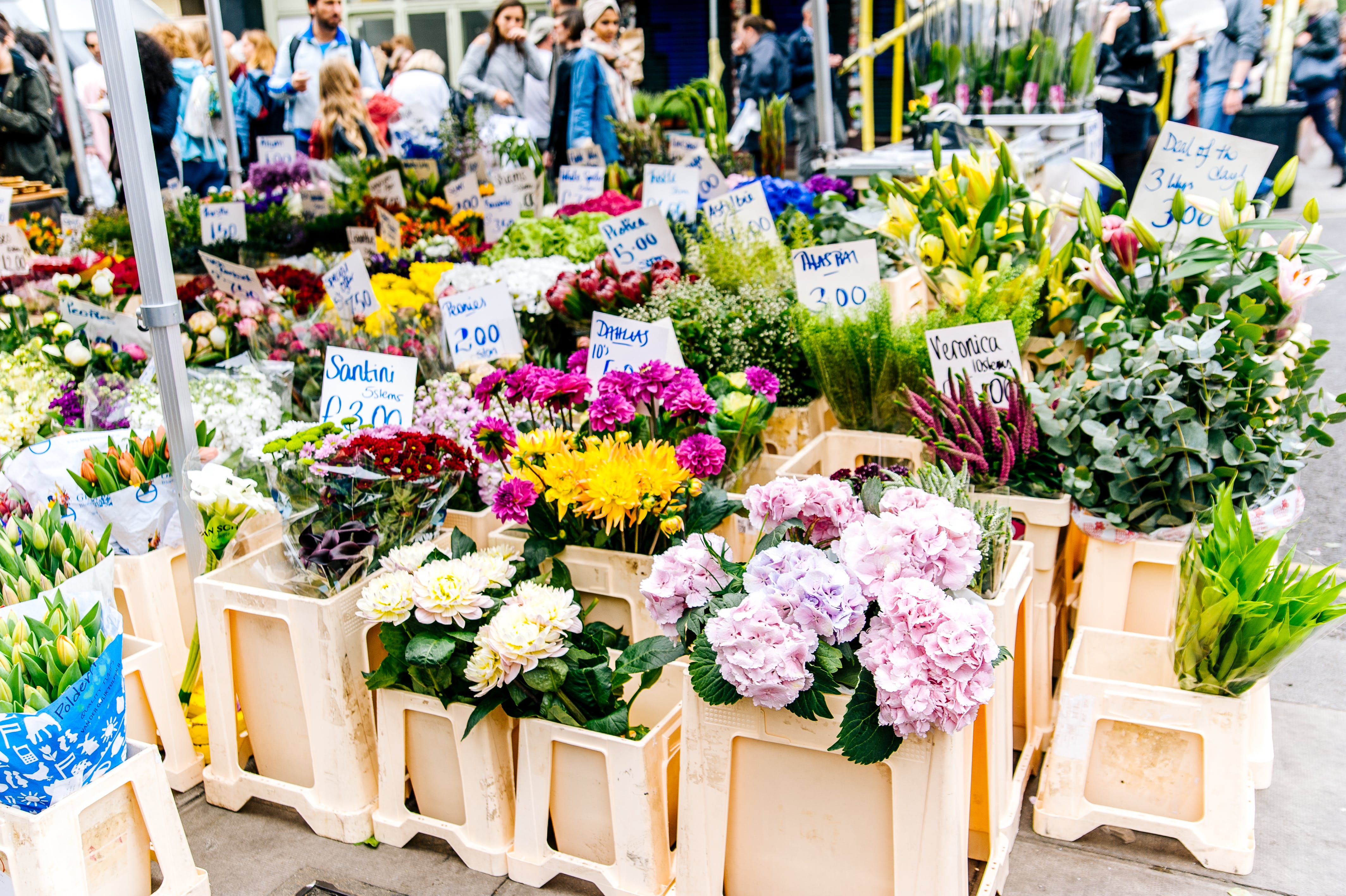 How I Became An Expert on Florists