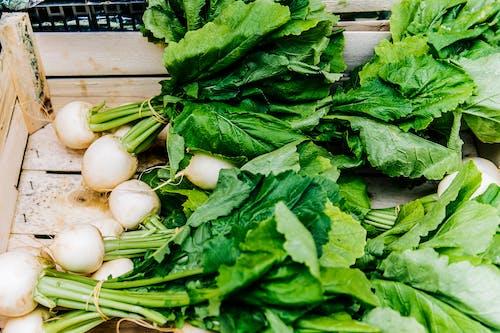 Foto profissional grátis de agricultura, alimento, aumentar, close