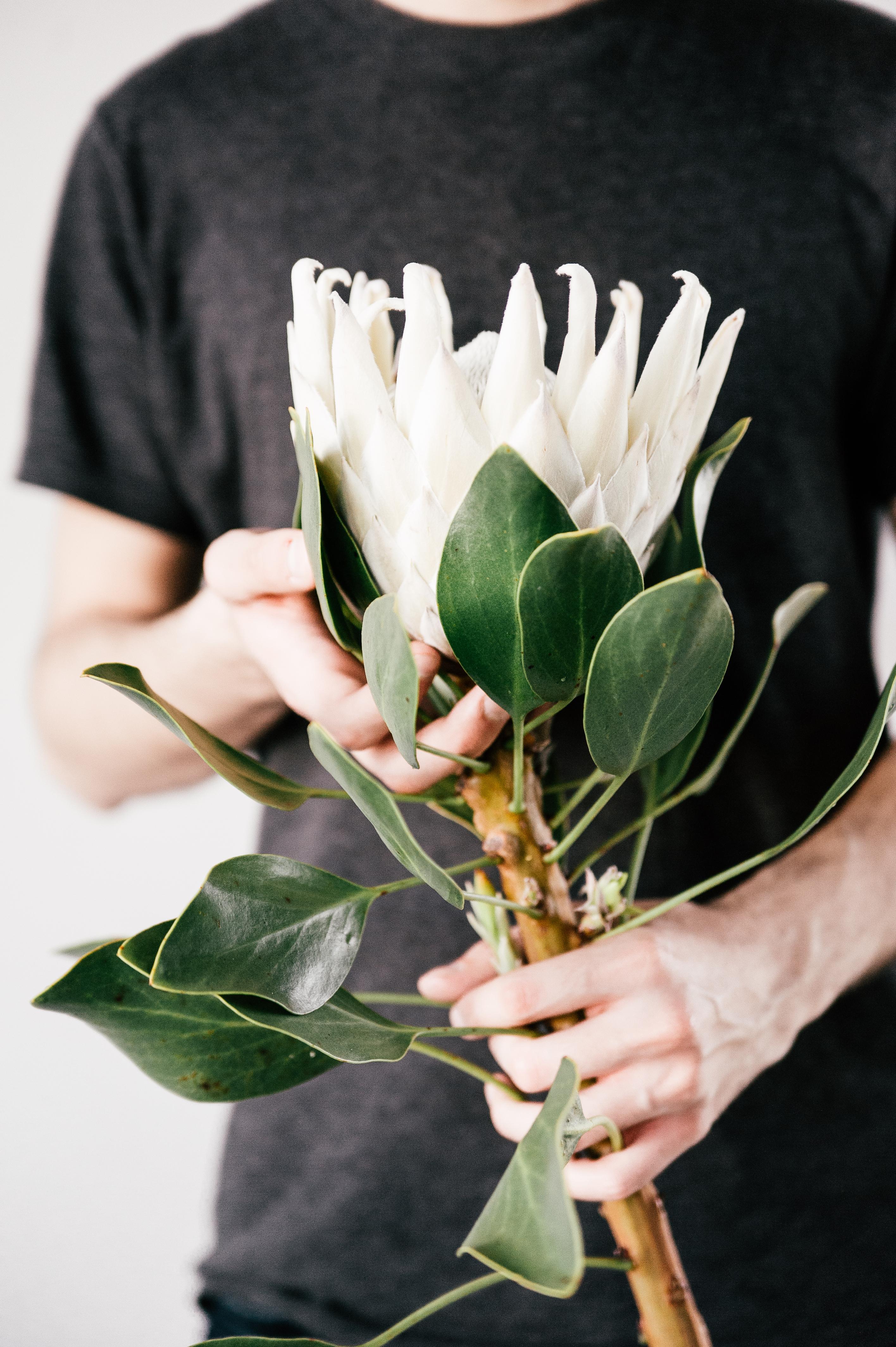 Man Holding White Petaled Flower on Bloom