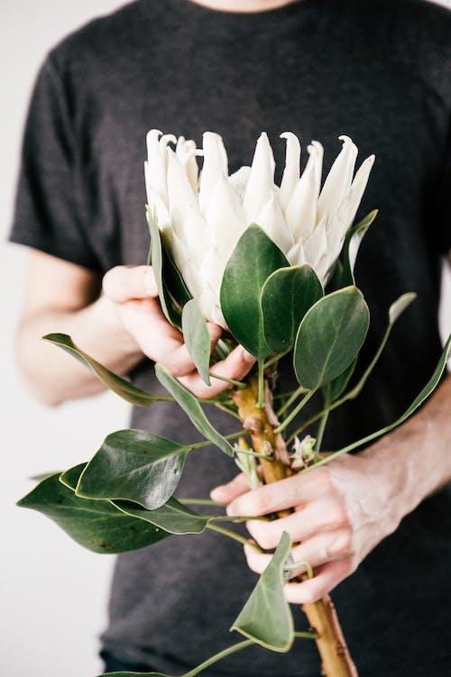 Homme Tenant Une Fleur Pétale Blanche Sur Bloom