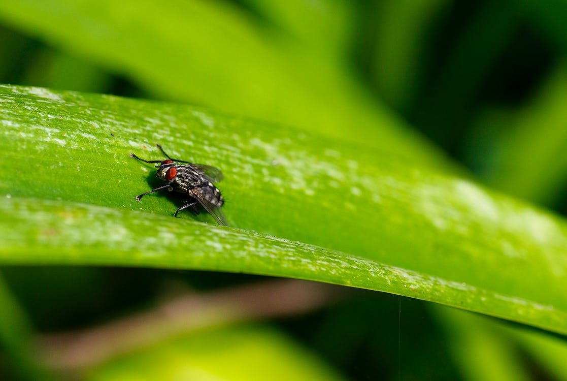 Close Up Focus Photo of a Grey and Black Fly on Green Leaf