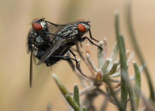 Two Black Flies