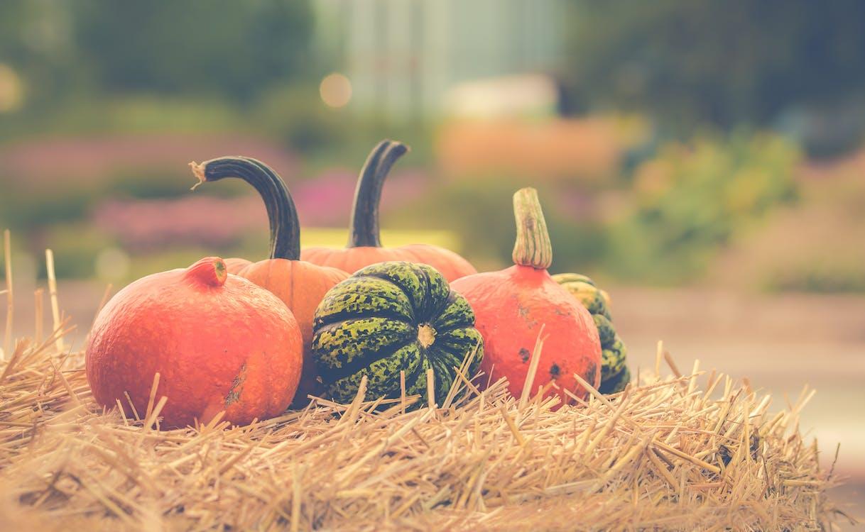 halloween, jerami, Jeruk
