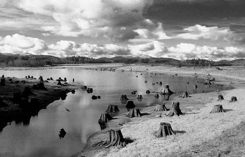 Fotos de stock gratuitas de agua, arboles, blanco y negro, césped