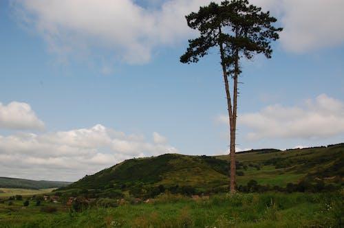 Free stock photo of lonely tree, transylvania