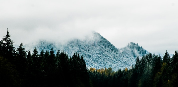 Mountain Alps Near Pine Trees