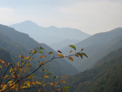 Free stock photo of mountains, transylvania