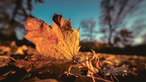 Foto d'estoc gratuïta de colors de tardor, daurat, flora, fons de pantalla de la natura