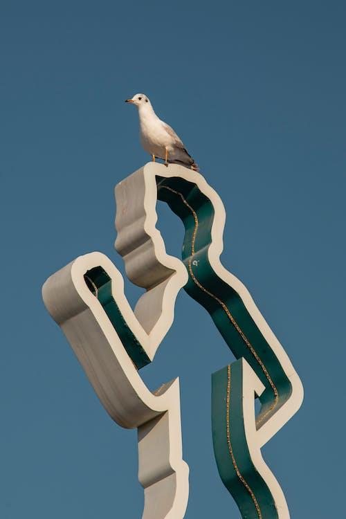 White Bird on Black Metal Stand