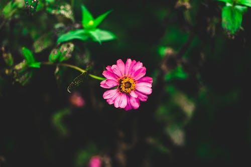Gratis lagerfoto af blomst, blomstrende, close-up
