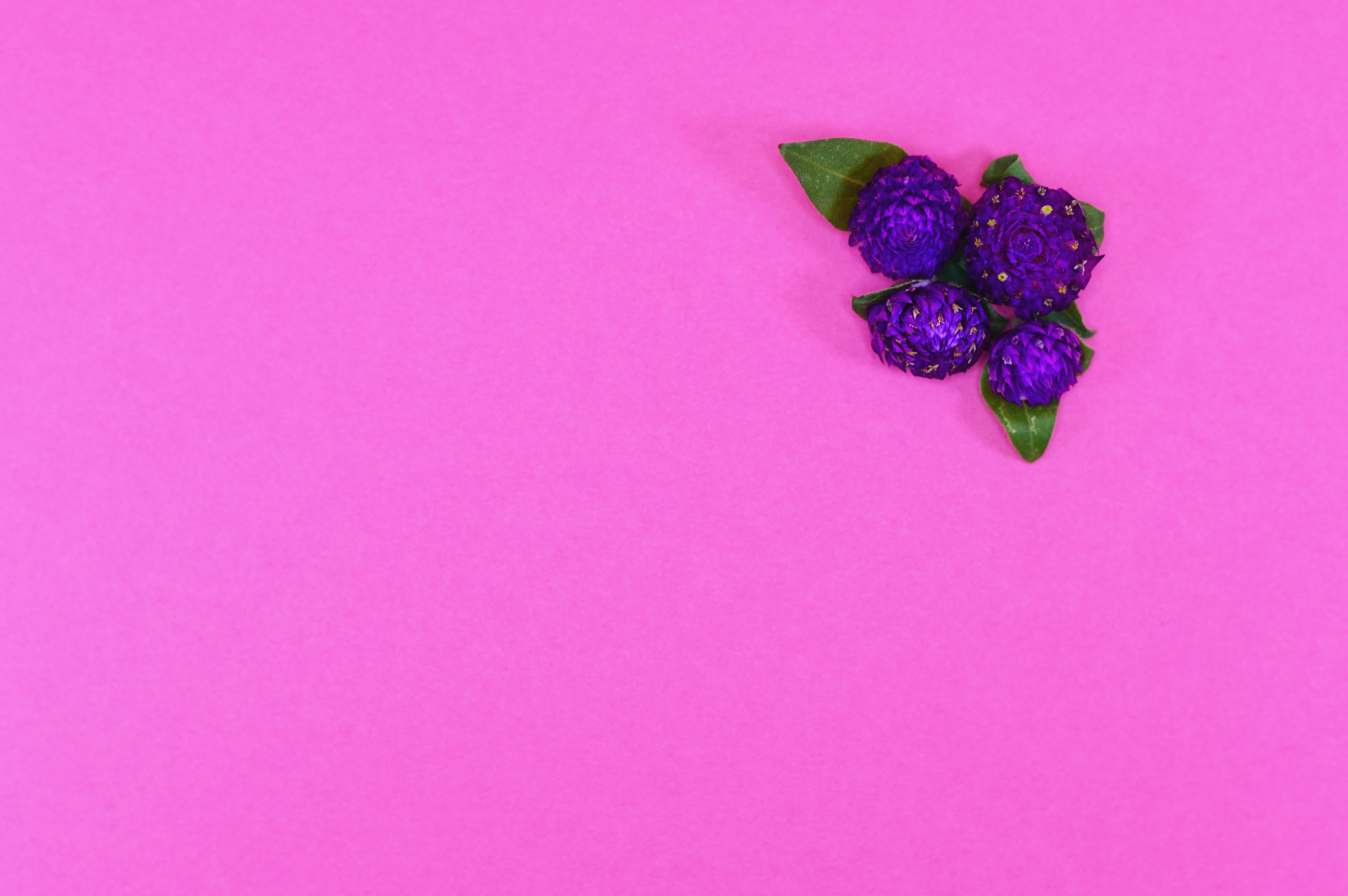 Free stock photo of nature, purple, texture, colorful