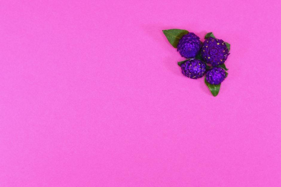 beauty, cempasuchil, colorful