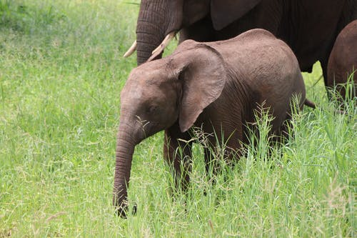 Brown Elephant on the Green Grass