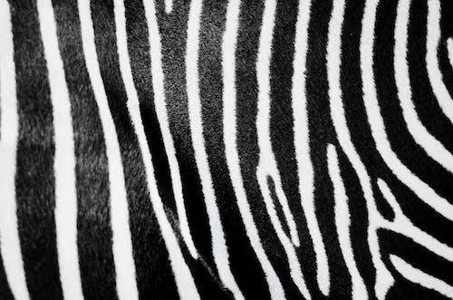 Δωρεάν στοκ φωτογραφιών με ασπρόμαυρο, γκρο πλαν, λωρίδες