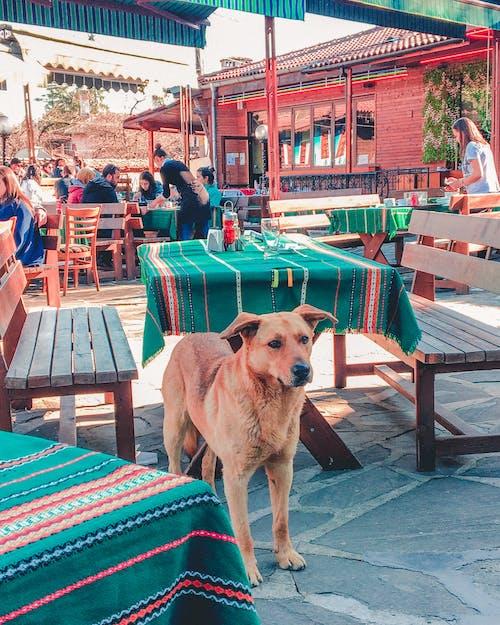 Fotos de stock gratuitas de adoptar un perro, Bulgaria, esperando