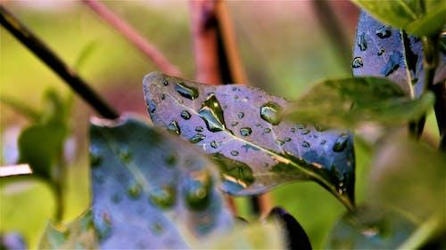 foglia, giardino, gocce, goccia içeren Ücretsiz stok fotoğraf