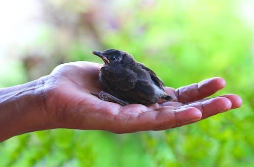 Δωρεάν στοκ φωτογραφιών με αγάπη, αγάπη για τα ζώα, ανθρώπινο χέρι
