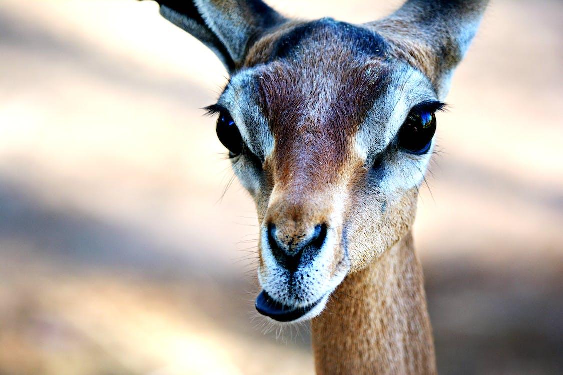 Antelope Macro Photography
