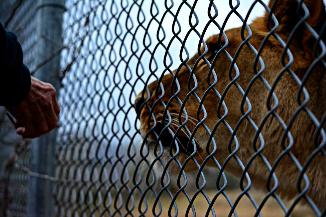 Free stock photo of africananimals, fence, hand