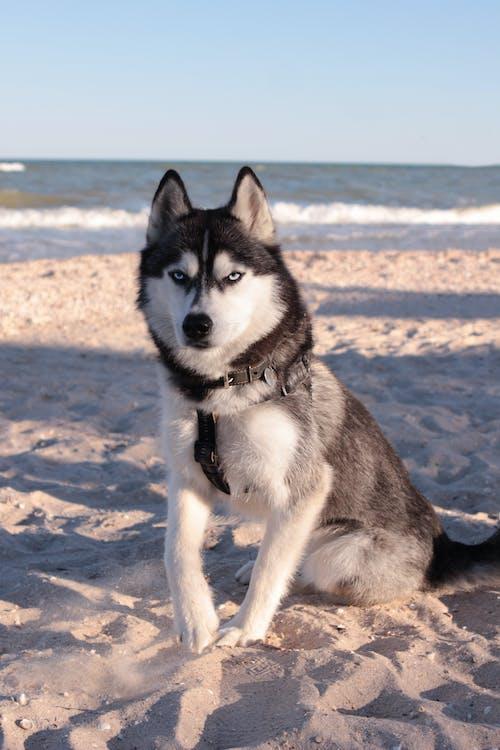Photos gratuites de animal, animal de compagnie, canin