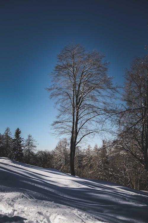 Snowy terrain with tall trees