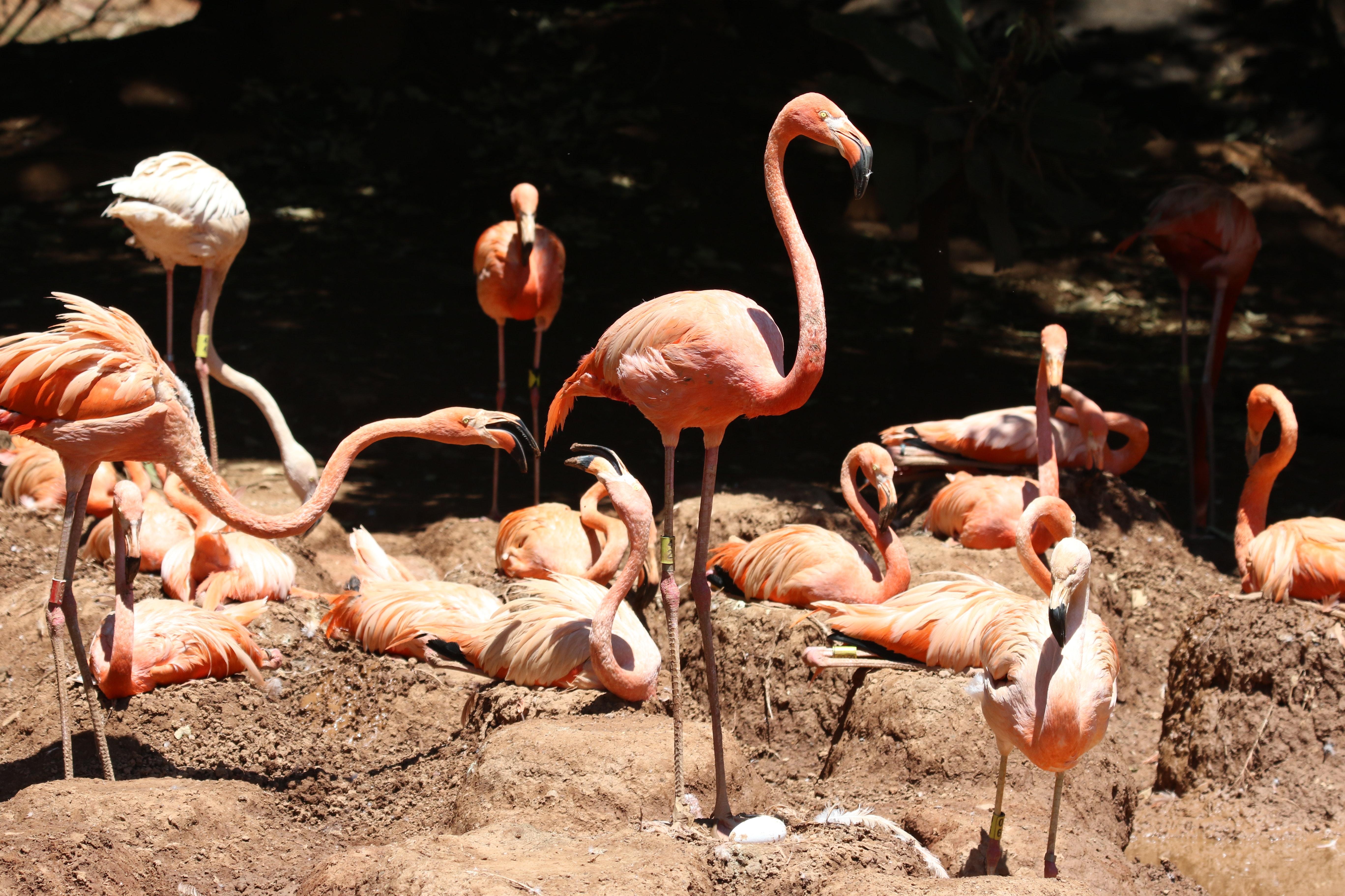 Free stock photo of animals, bird, birds