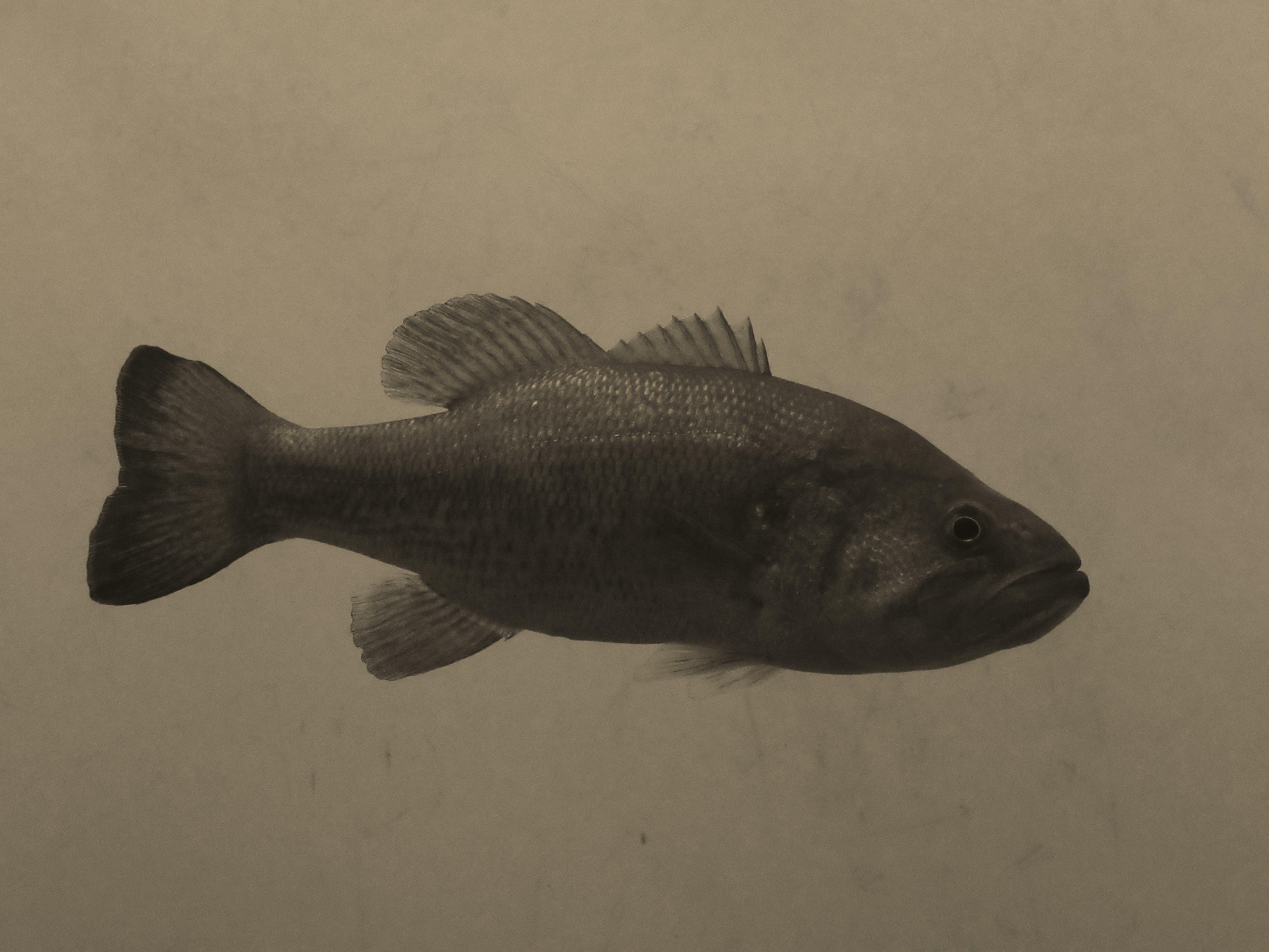 Free stock photo of nature, animal, fish, wild