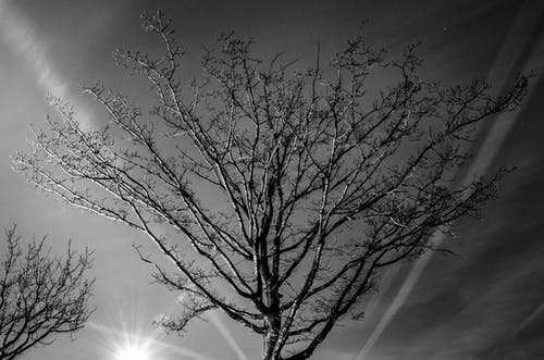 Grayscale Photography of Bare Tree