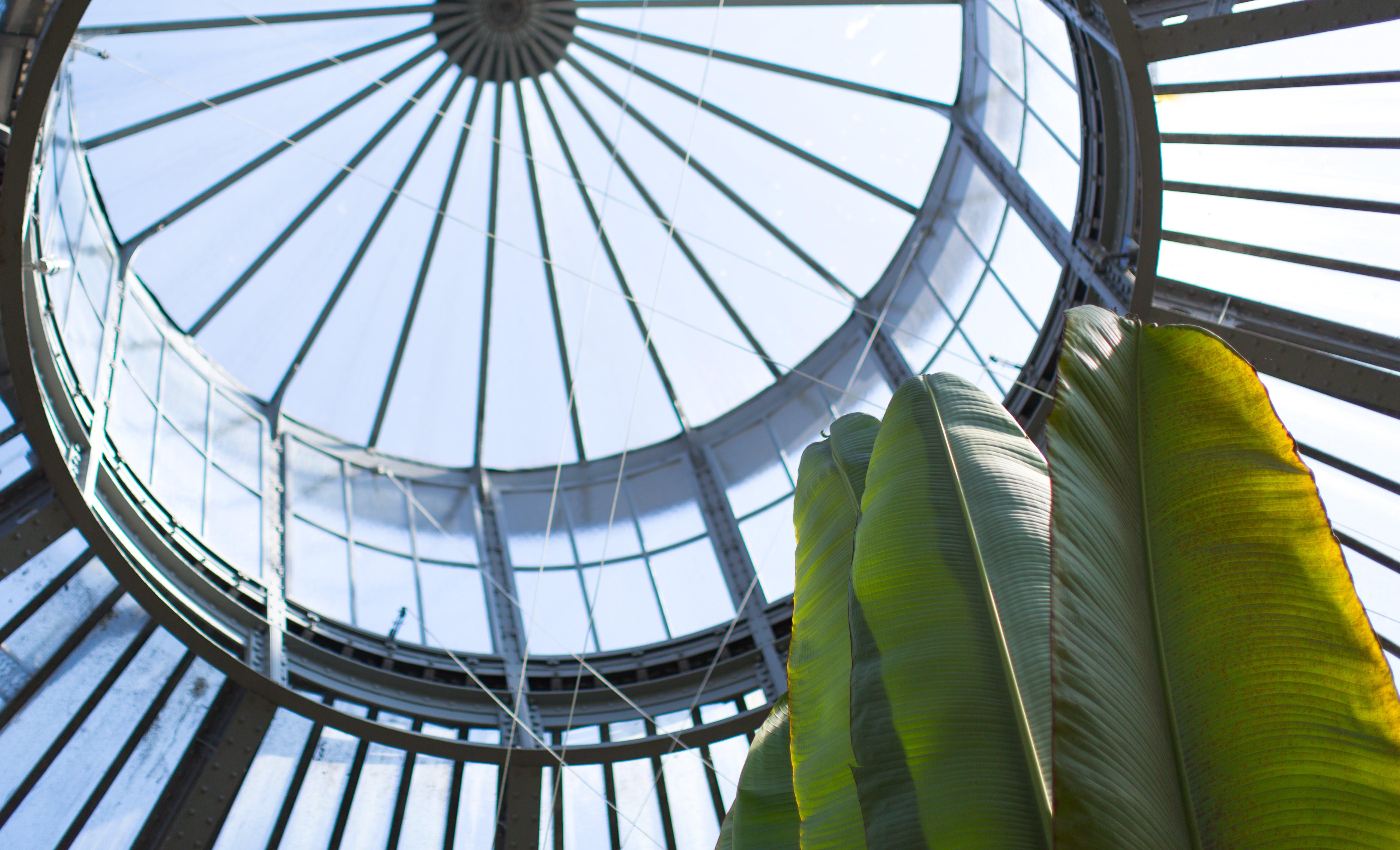 Kostenloses Stock Foto zu architektur, botanischen, dom, garten