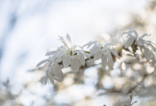 Flor De Pétalas Brancas Durante O Dia