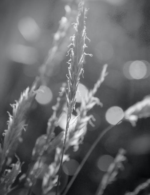 Free stock photo of grass