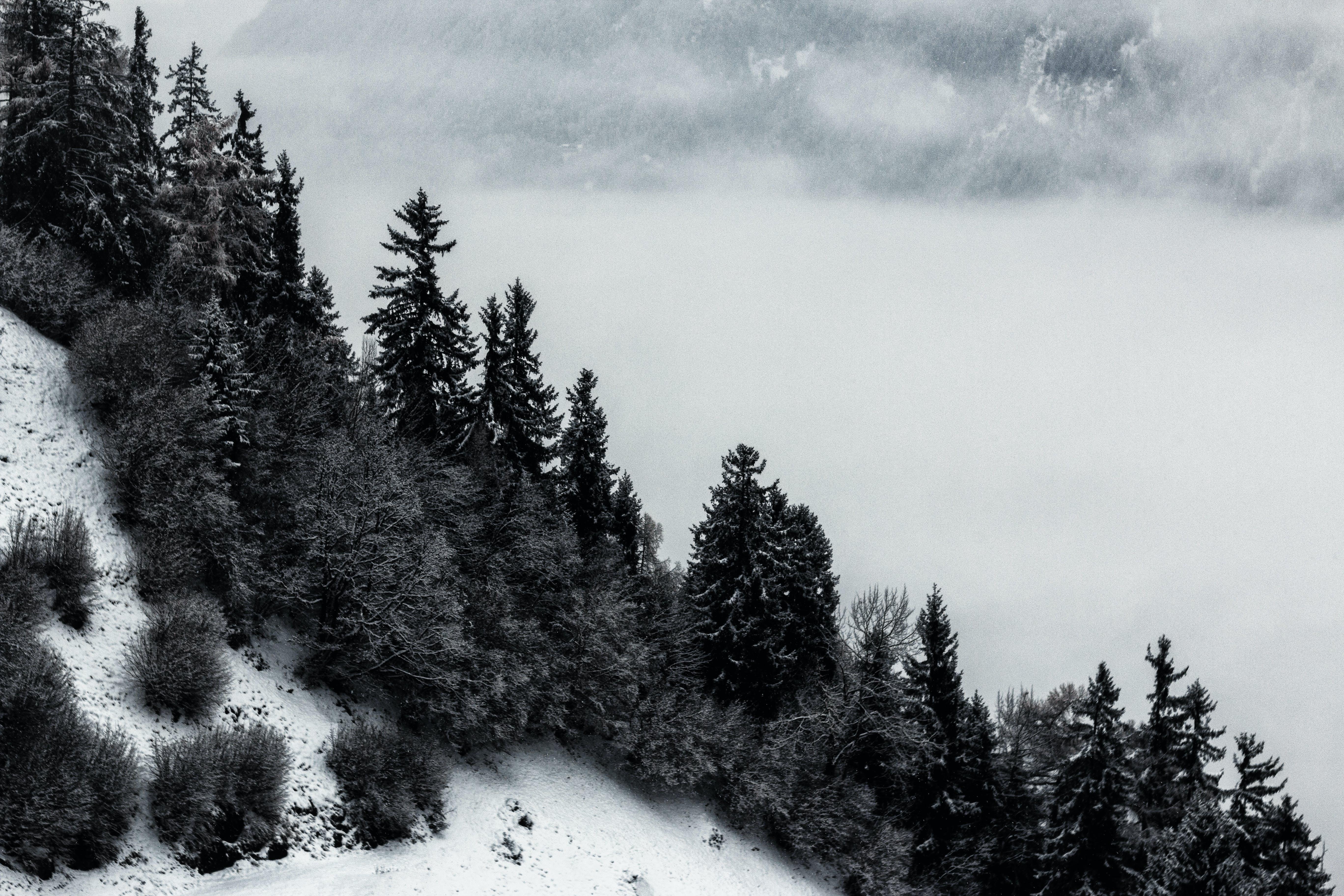 Darmowe zdjęcie z galerii z czarno-biały, drzewa, drzewo iglaste, góra