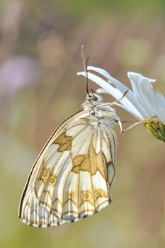 White and Brown Butterfly on White Flower
