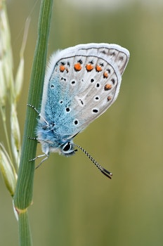 White Brown Black and Blue Butterfly Standing in Green Plant