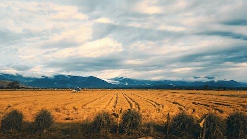 Kostnadsfri bild av Adobe Photoshop, berg, bondgård, djuruppfödning