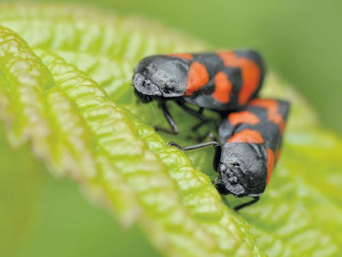 Black and Orange Insect Eating Green Leaf during Daytime in Camera Focus Photography