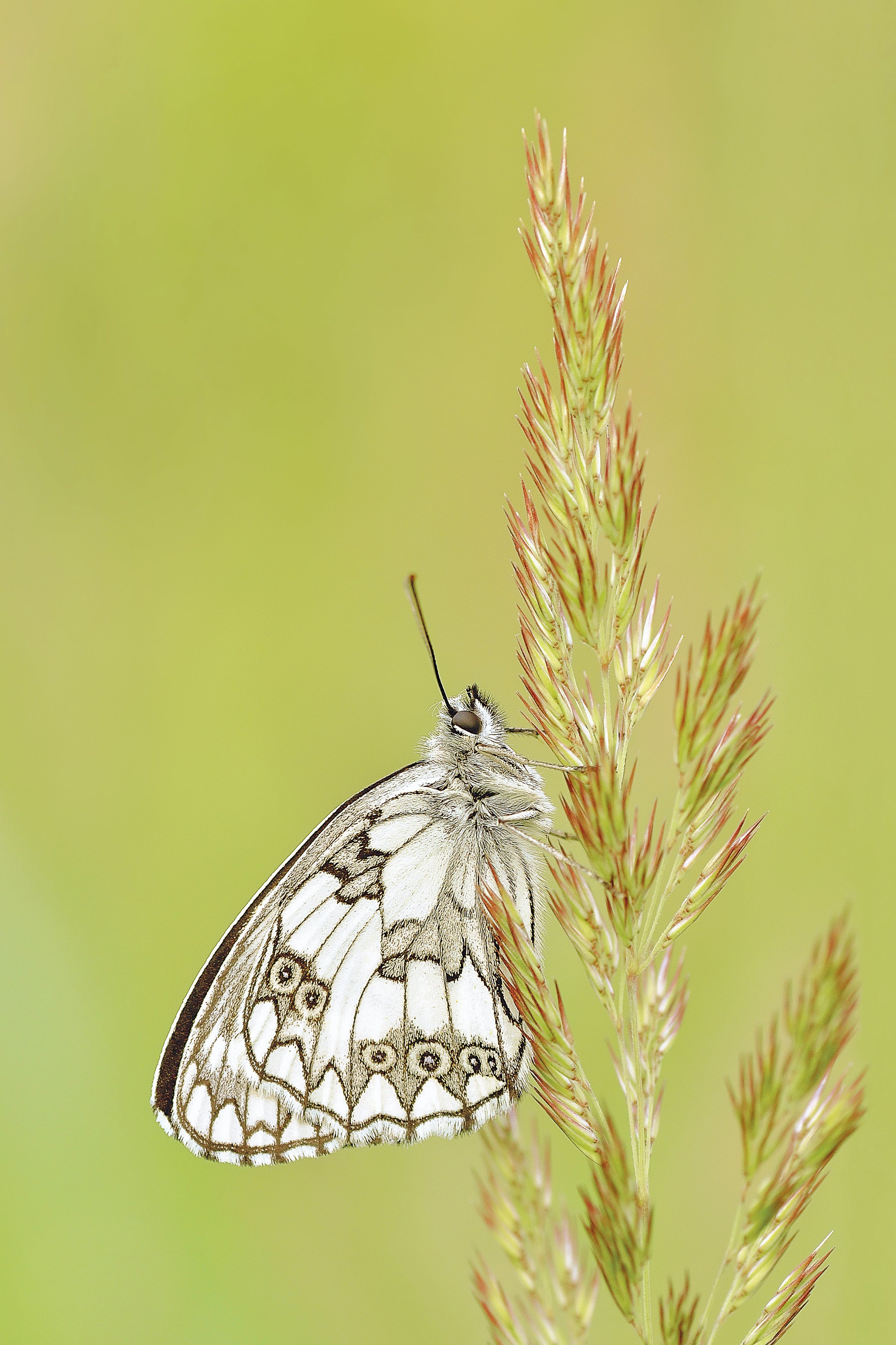 White and Brown Butterfly on Green and Pink Leaf Plant