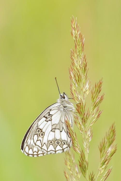 곤충, 나비, 식물, 자연의 무료 스톡 사진