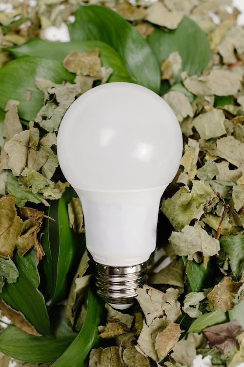 White Light Bulb on Green Plant