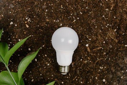White Light Bulb on Brown Soil