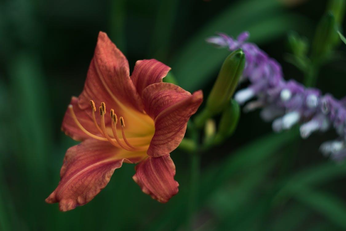 adâncime de câmp, flori frumoase, fundal încețoșat