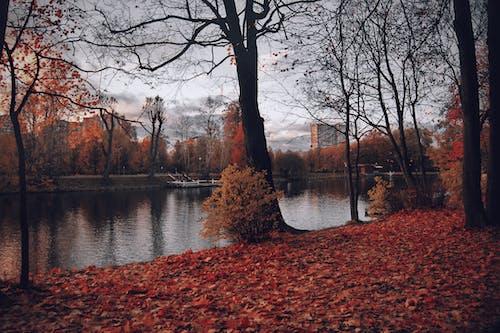 Základová fotografie zdarma na téma idylický, javorové listy, kmeny stromů, krajina