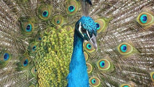 Gratis lagerfoto af close-up, dyr, fjerdragt, fugl