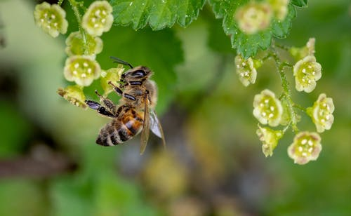 Free stock photo of bee, close up view, foraging